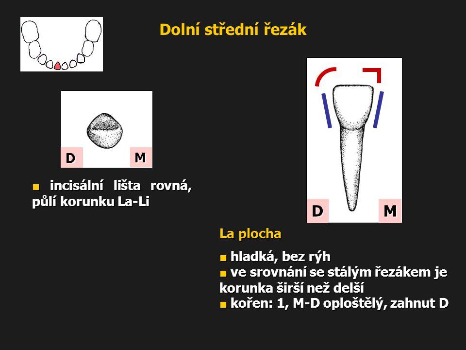 Dolní střední řezák M D M D