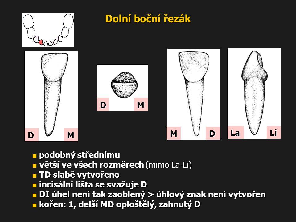 Dolní boční řezák D M La Li M D D M ■ podobný střednímu