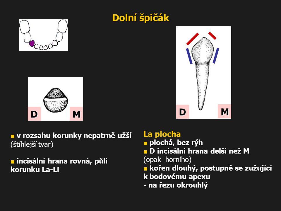 Dolní špičák D M D M La plocha