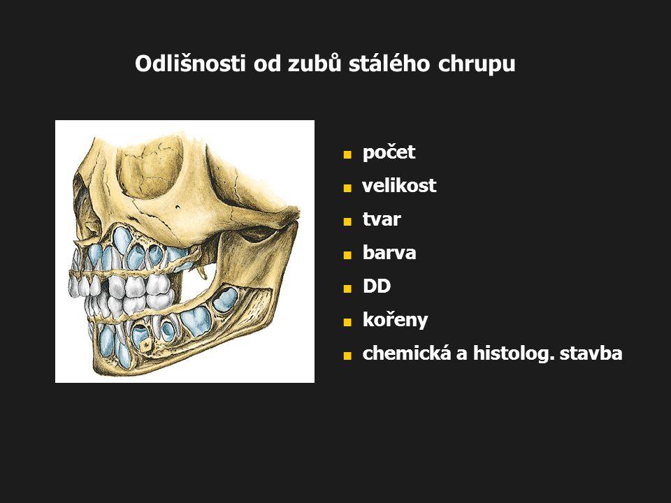 Odlišnosti od zubů stálého chrupu