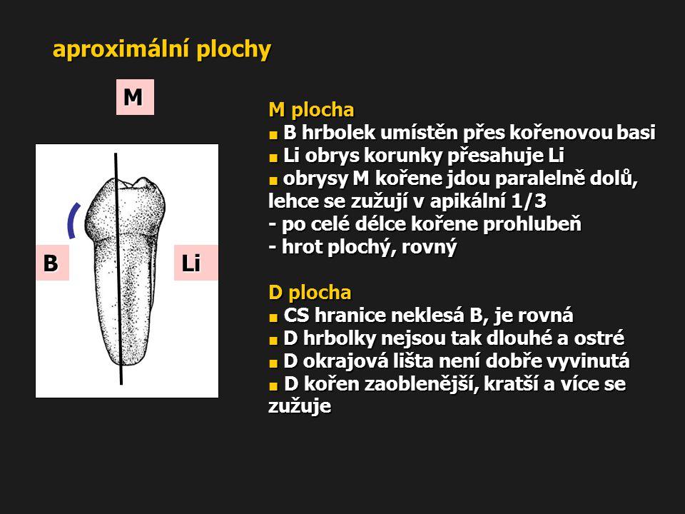 aproximální plochy M B Li M plocha - po celé délce kořene prohlubeň