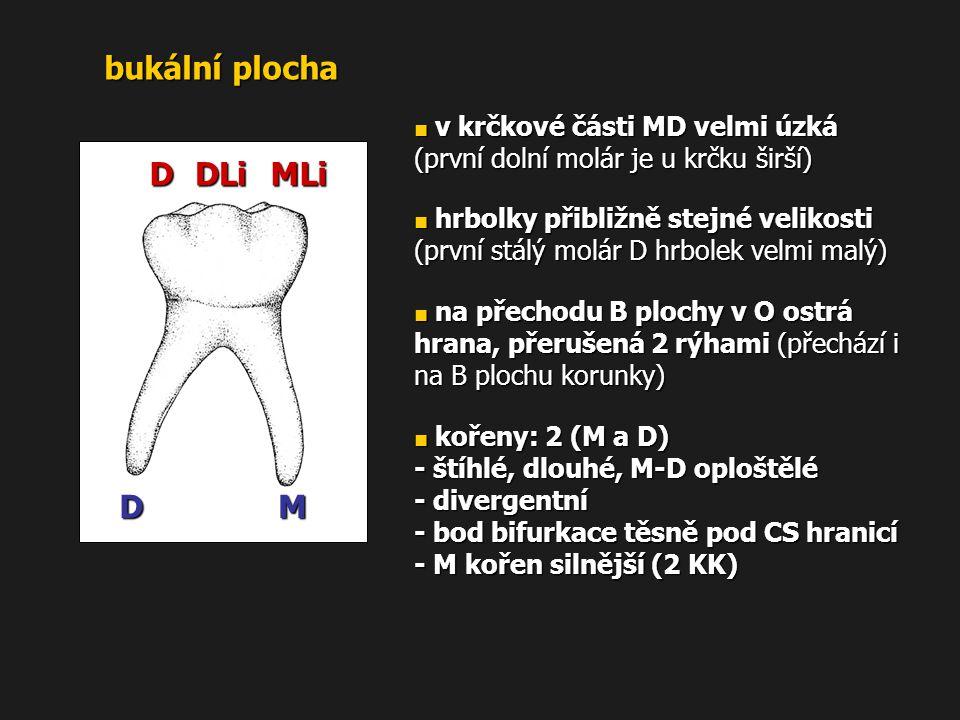bukální plocha MLi DLi D M