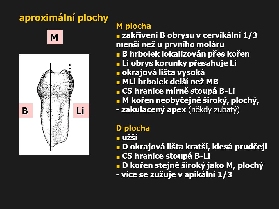 aproximální plochy M B Li M plocha D plocha