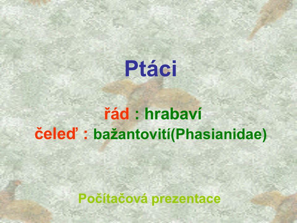 Ptáci řád : hrabaví čeleď : bažantovití(Phasianidae)
