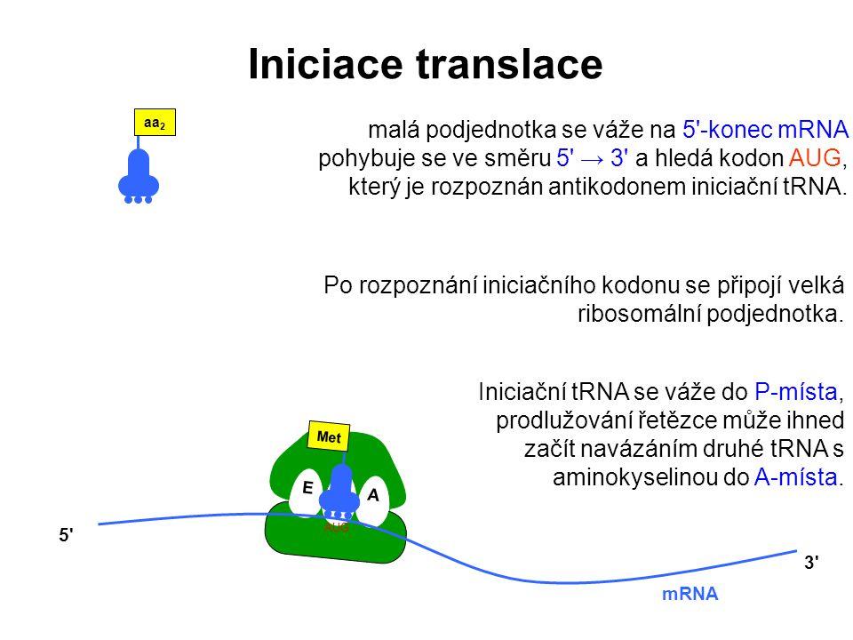 Iniciace translace aa2.