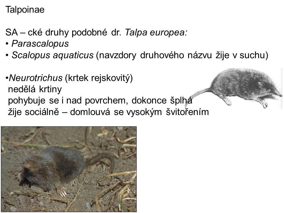 Talpoinae SA – cké druhy podobné dr. Talpa europea: Parascalopus. Scalopus aquaticus (navzdory druhového názvu žije v suchu)