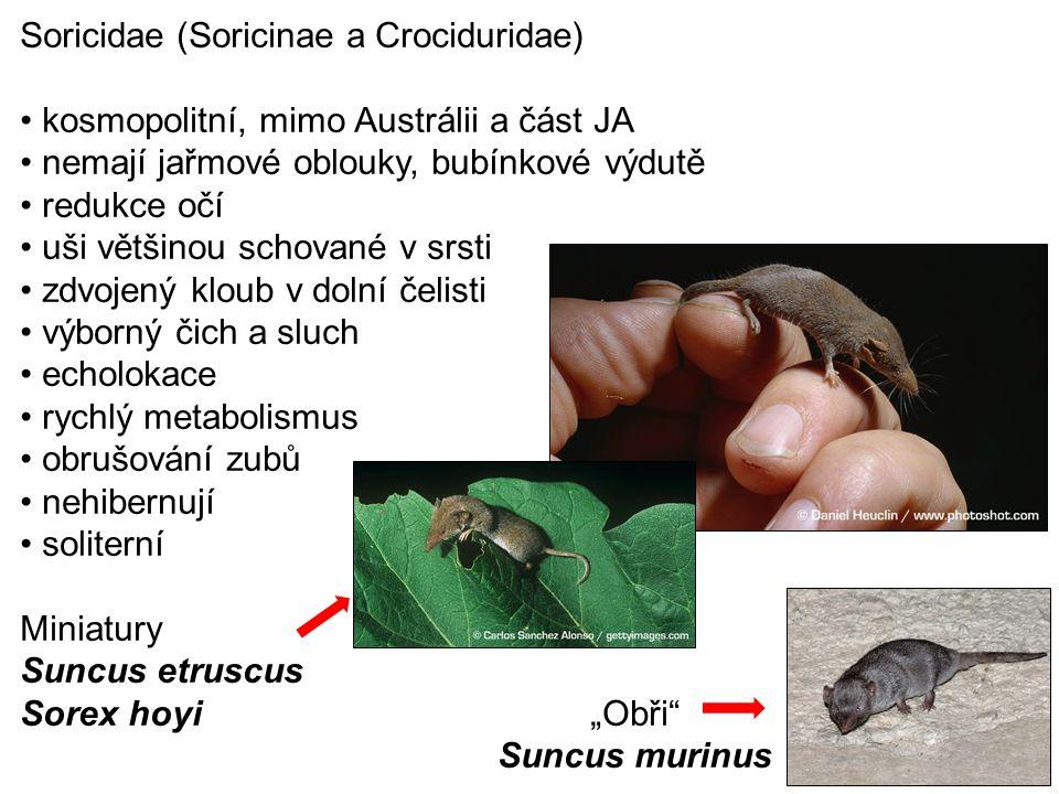 Soricidae (Soricinae a Crociduridae)