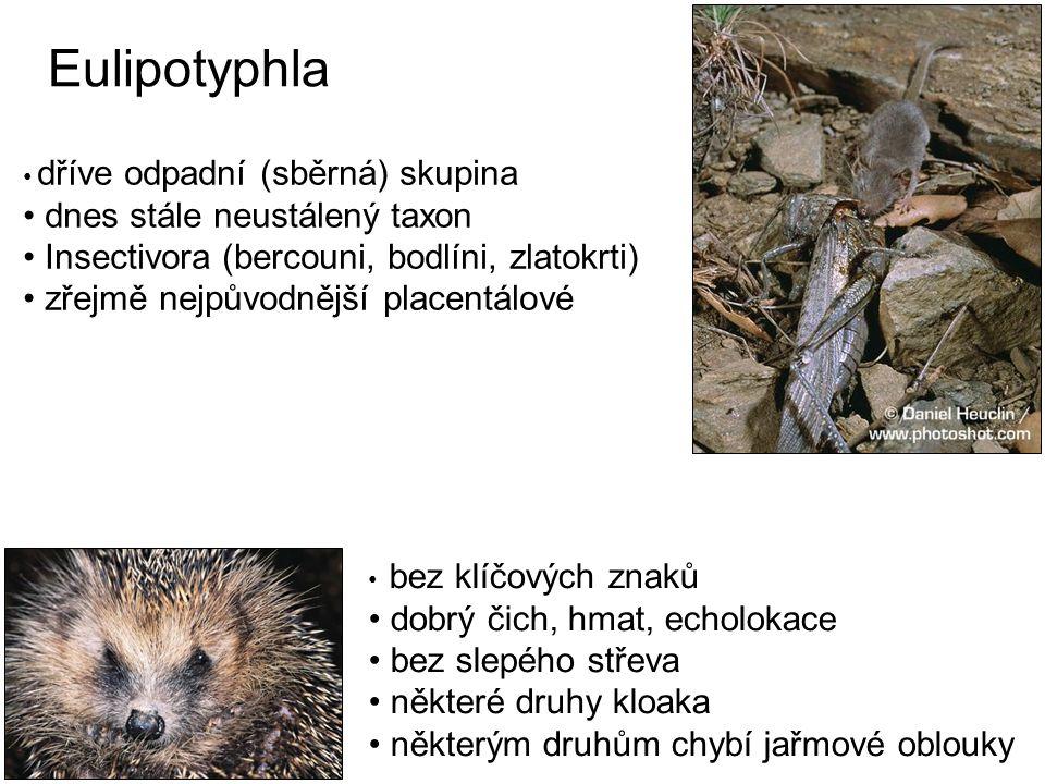 Eulipotyphla dnes stále neustálený taxon