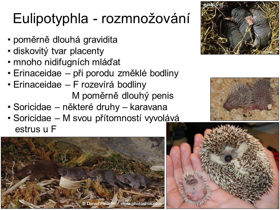 Eulipotyphla - rozmnožování