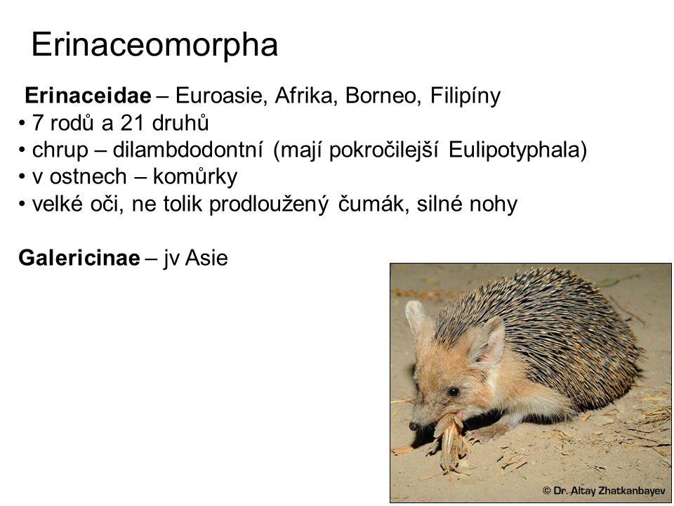 Erinaceomorpha Erinaceidae – Euroasie, Afrika, Borneo, Filipíny