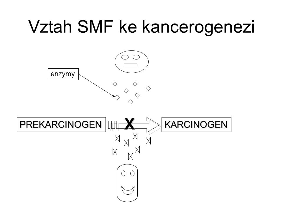 Vztah SMF ke kancerogenezi