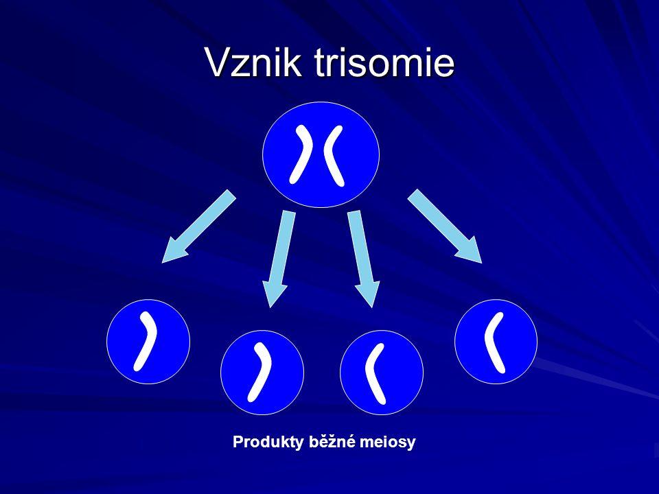 Vznik trisomie Produkty běžné meiosy