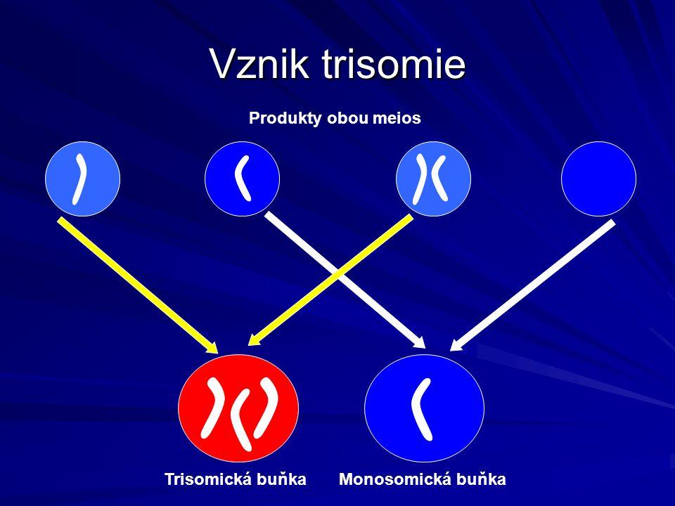 Vznik trisomie Produkty obou meios Trisomická buňka Monosomická buňka
