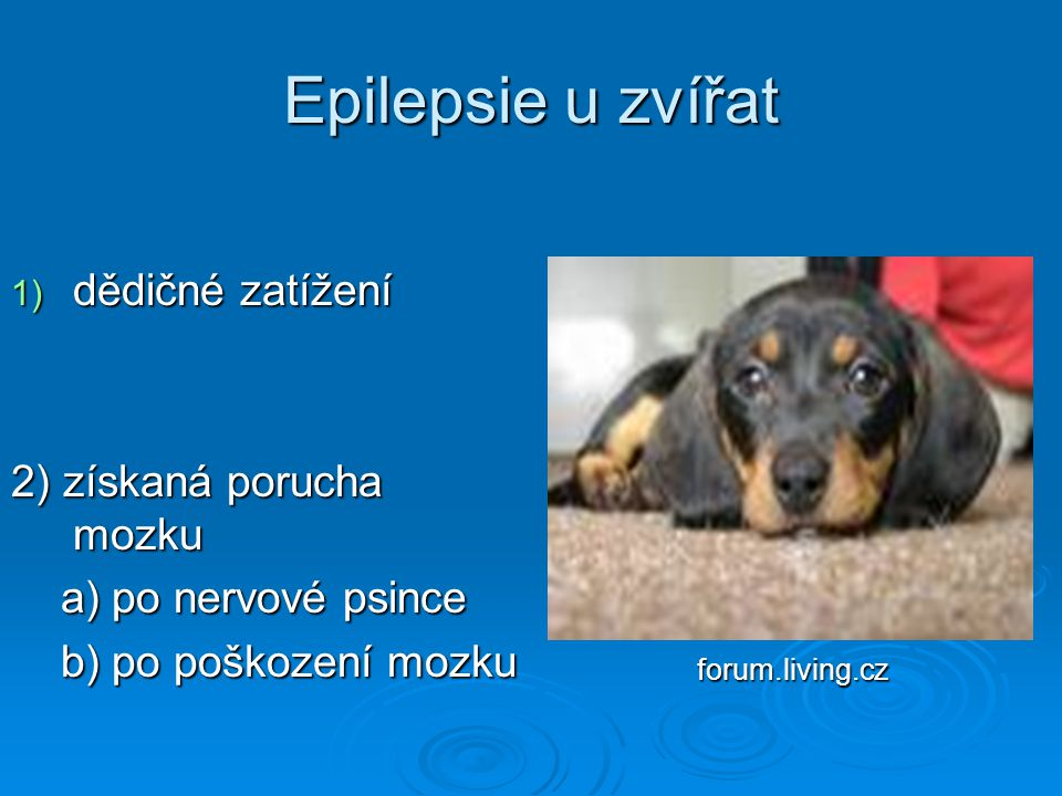 Epilepsie u zvířat dědičné zatížení 2) získaná porucha mozku