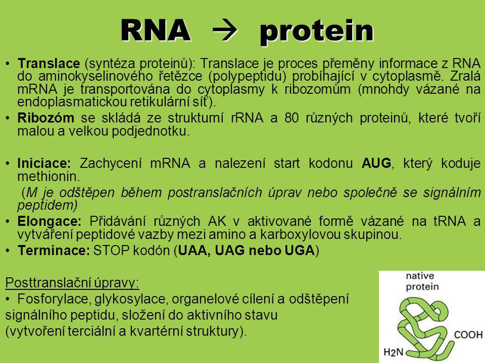 RNA  protein