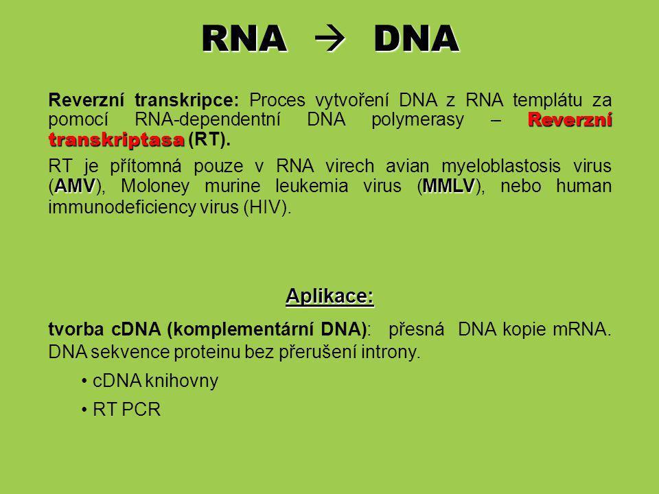 RNA  DNA Reverzní transkripce: Proces vytvoření DNA z RNA templátu za pomocí RNA-dependentní DNA polymerasy – Reverzní transkriptasa (RT).