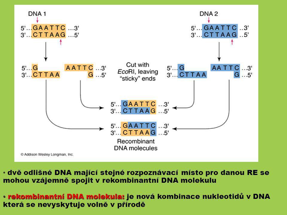 dvě odlišné DNA mající stejné rozpoznávací místo pro danou RE se mohou vzájemně spojit v rekombinantní DNA molekulu