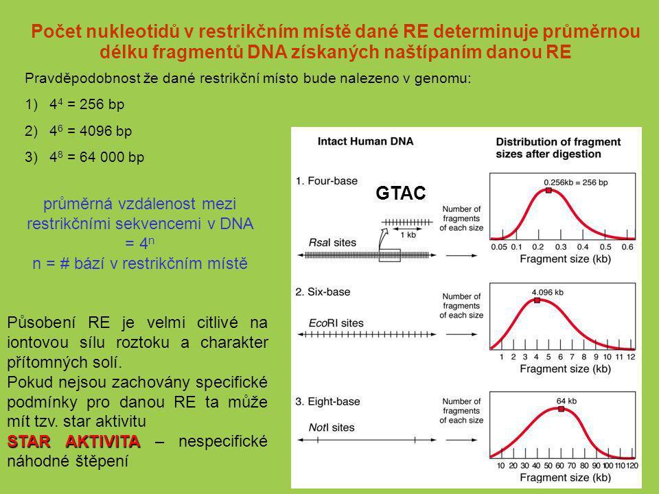 Počet nukleotidů v restrikčním místě dané RE determinuje průměrnou délku fragmentů DNA získaných naštípaním danou RE