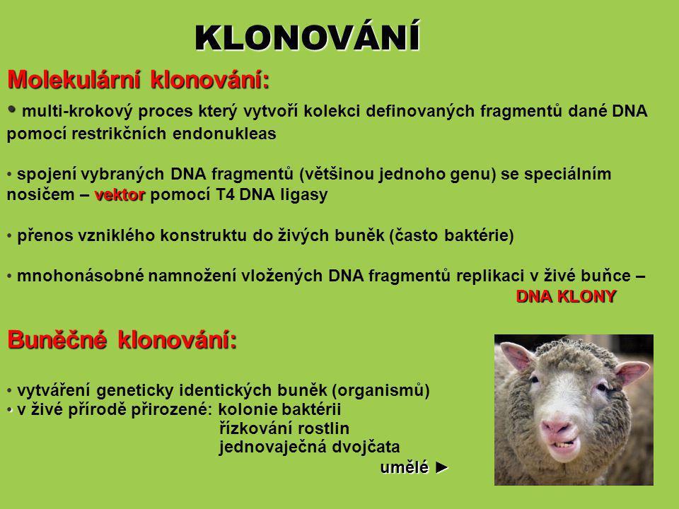 KLONOVÁNÍ Molekulární klonování: