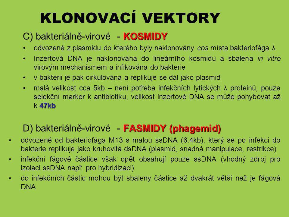 KLONOVACÍ VEKTORY C) bakteriálně-virové - KOSMIDY