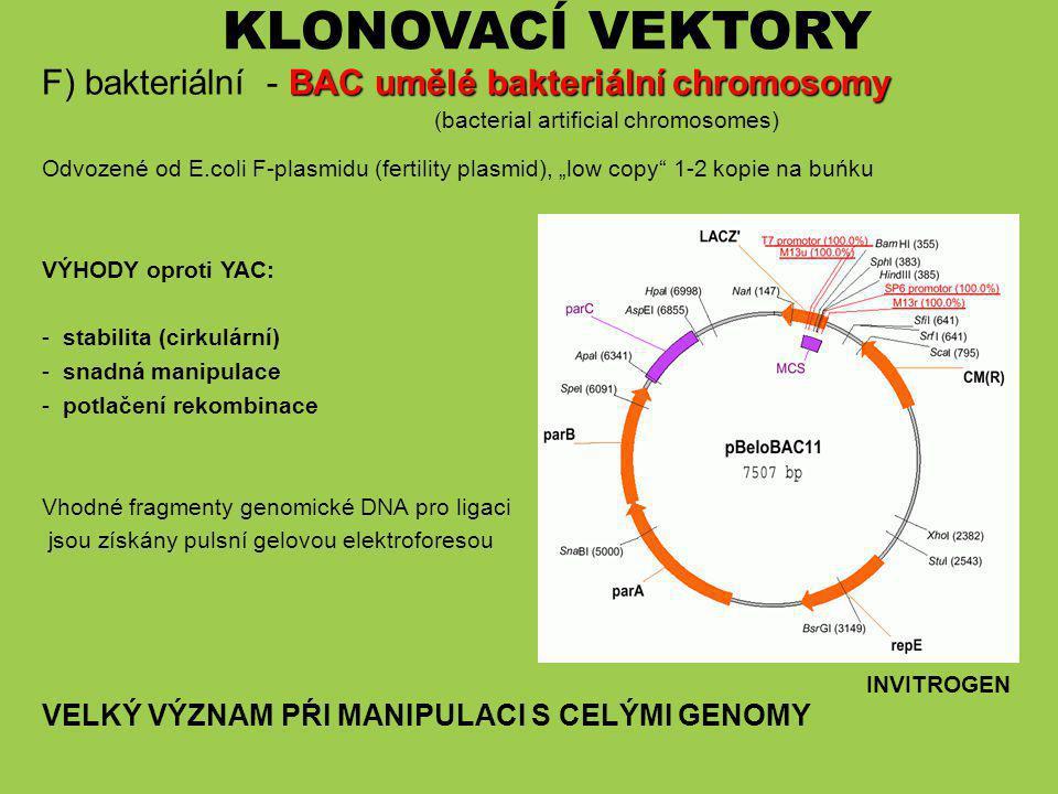 KLONOVACÍ VEKTORY F) bakteriální - BAC umělé bakteriální chromosomy (bacterial artificial chromosomes)
