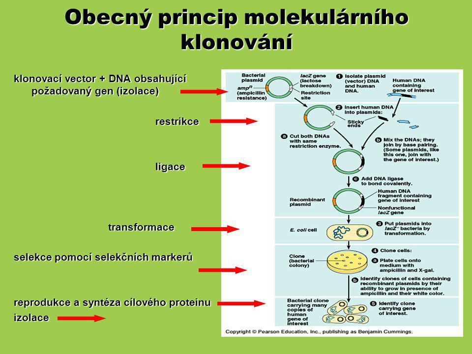 Obecný princip molekulárního klonování