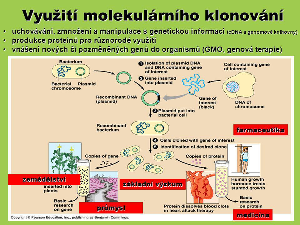 Využití molekulárního klonování