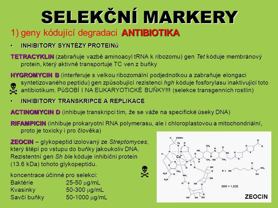 SELEKČNÍ MARKERY   geny kódující degradaci ANTIBIOTIKA