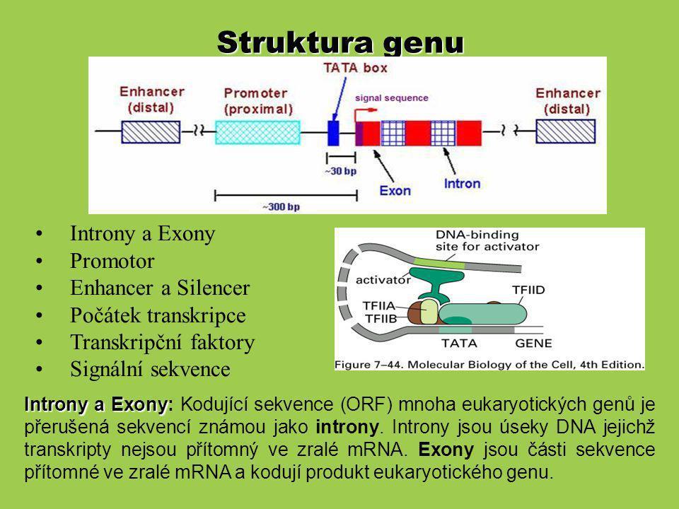 Struktura genu Introny a Exony Promotor Enhancer a Silencer