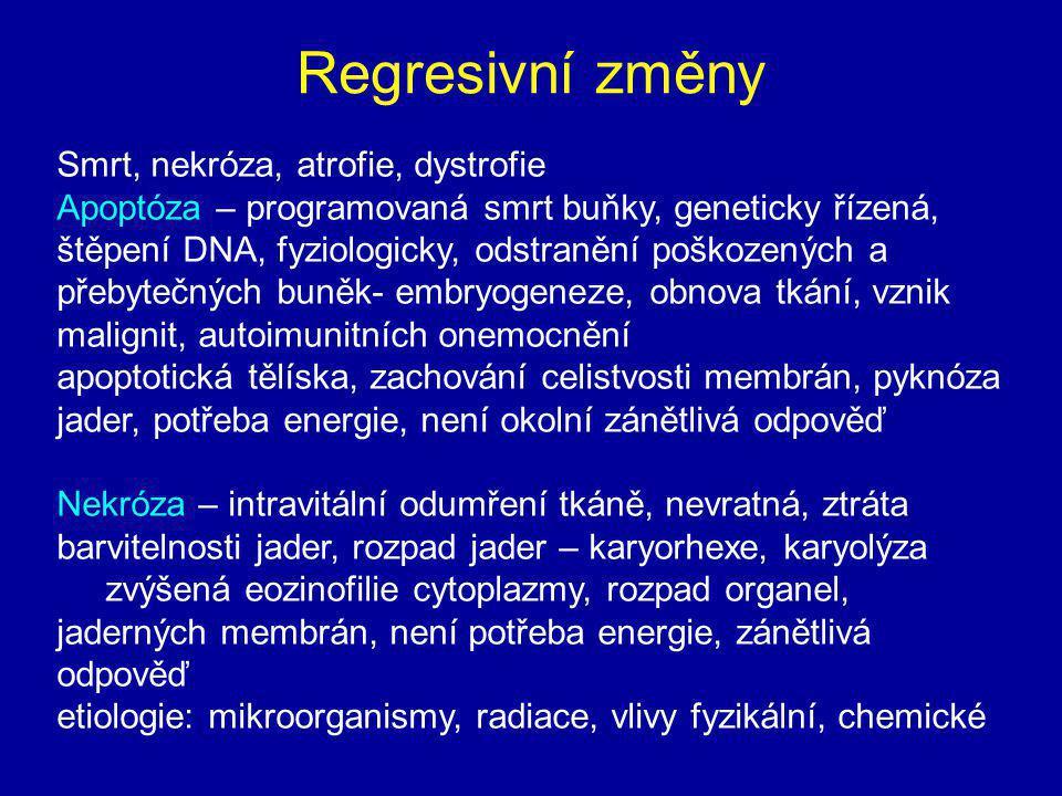 Regresivní změny Smrt, nekróza, atrofie, dystrofie