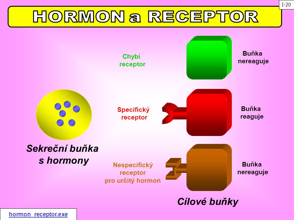 Sekreční buňka s hormony Cílové buňky