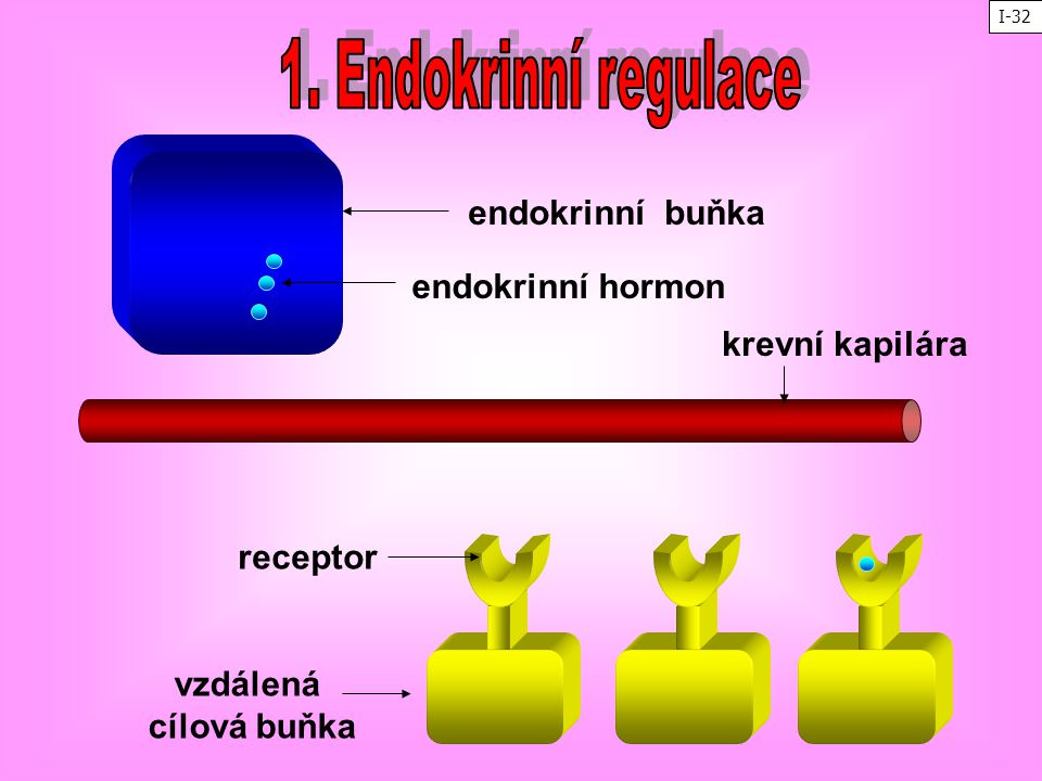 1. Endokrinní regulace endokrinní buňka endokrinní hormon