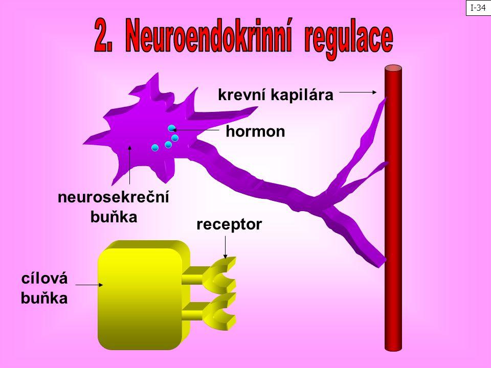 2. Neuroendokrinní regulace