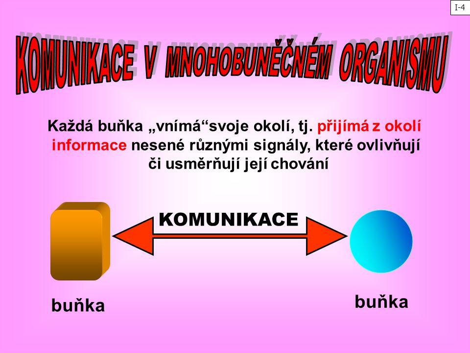 KOMUNIKACE buňka buňka KOMUNIKACE V MNOHOBUNĚČNÉM ORGANISMU