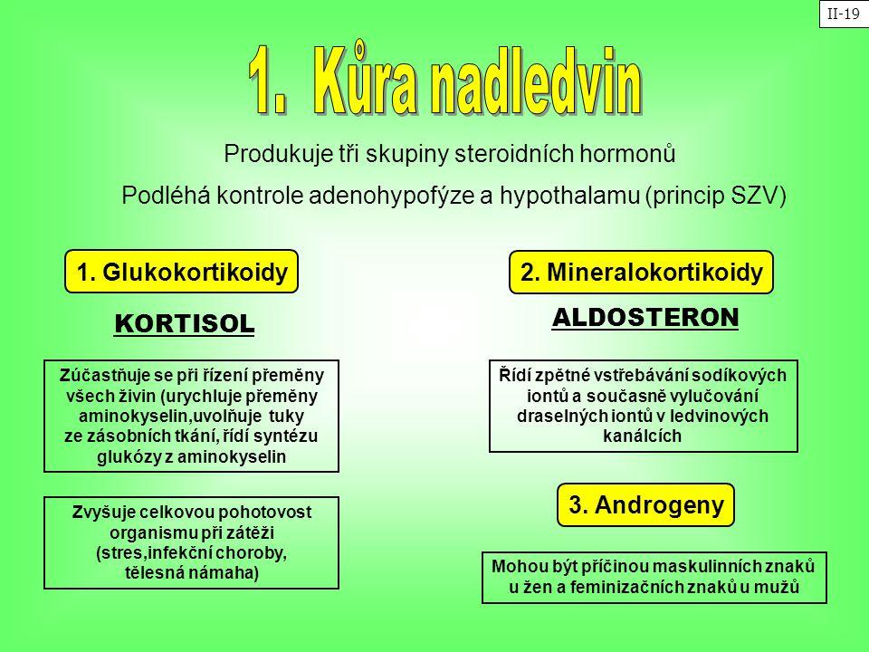 Produkuje tři skupiny steroidních hormonů