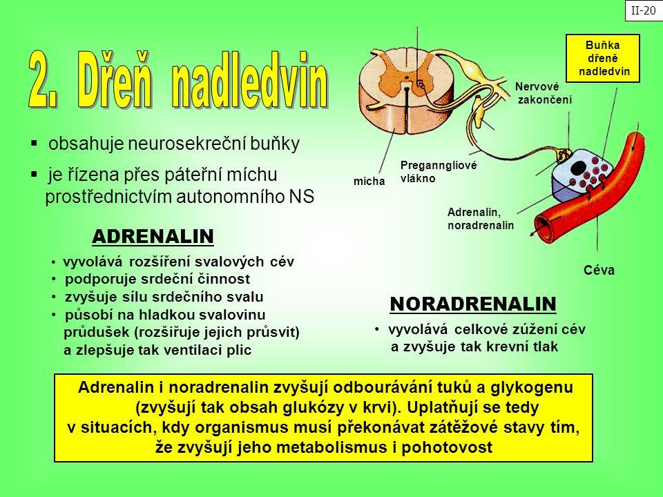 2. Dřeň nadledvin ADRENALIN NORADRENALIN