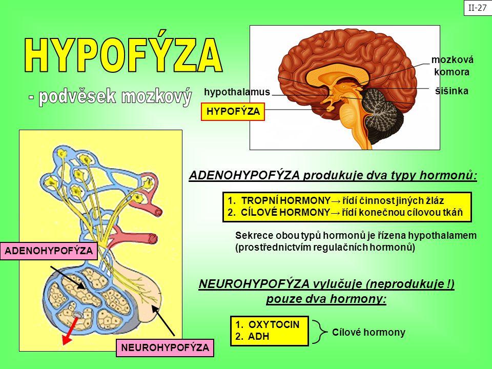 NEUROHYPOFÝZA vylučuje (neprodukuje !)