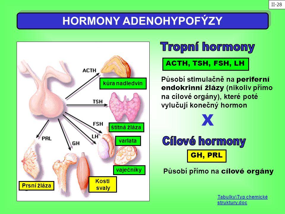 HORMONY ADENOHYPOFÝZY Působí přímo na cílové orgány