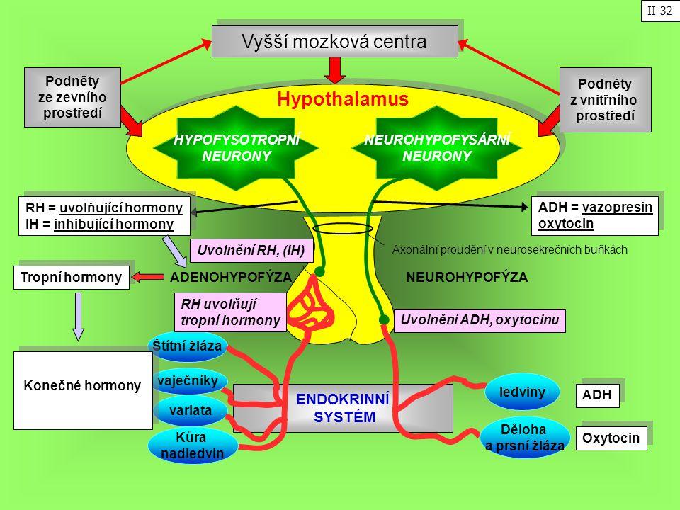 Vyšší mozková centra Hypothalamus ENDOKRINNÍ SYSTÉM Podněty ze zevního