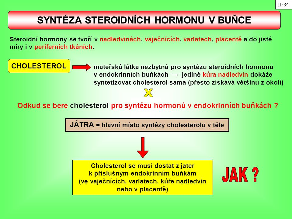JAK X SYNTÉZA STEROIDNÍCH HORMONU V BUŇCE CHOLESTEROL