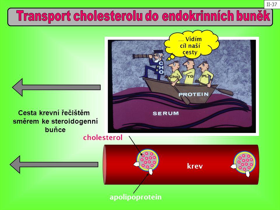 Transport cholesterolu do endokrinních buněk směrem ke steroidogenní