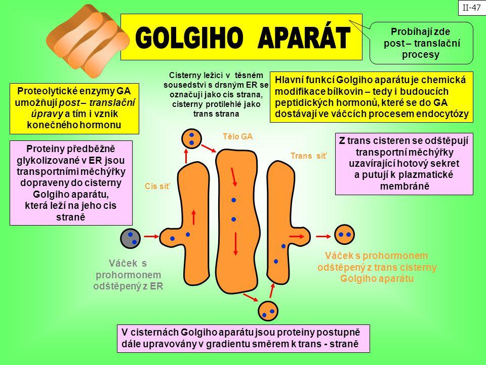 GOLGIHO APARÁT Probíhají zde post – translační procesy