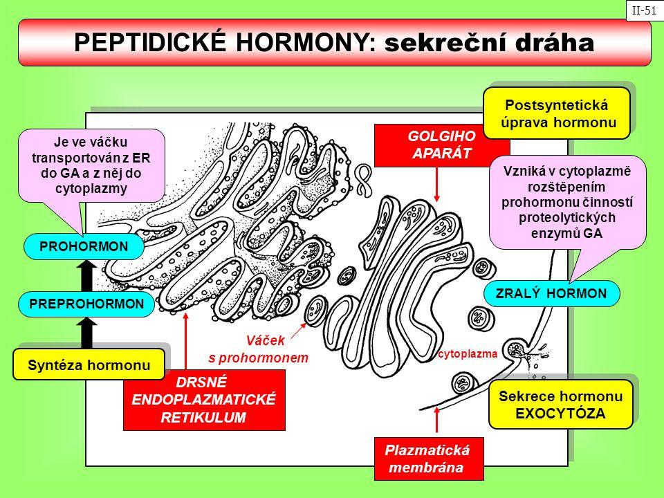 PEPTIDICKÉ HORMONY: sekreční dráha