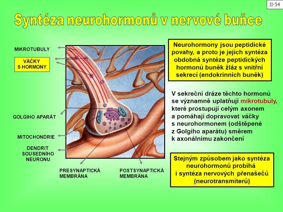 Syntéza neurohormonů v nervové buňce