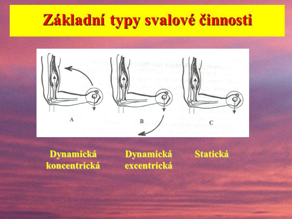 Základní typy svalové činnosti