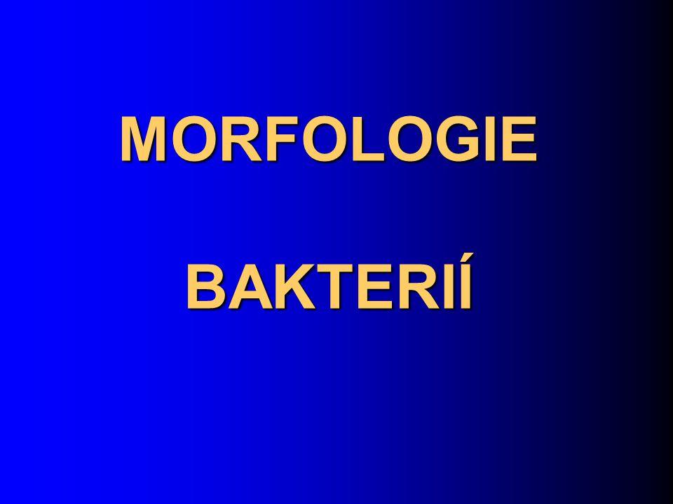 MORFOLOGIE BAKTERIÍ