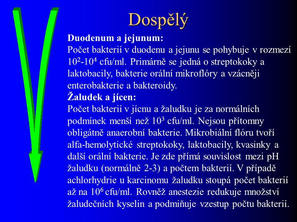 Dospělý Duodenum a jejunum: