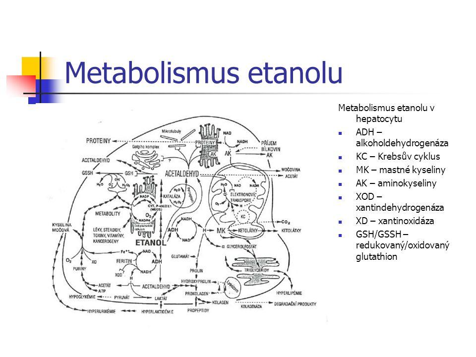 Metabolismus etanolu Metabolismus etanolu v hepatocytu