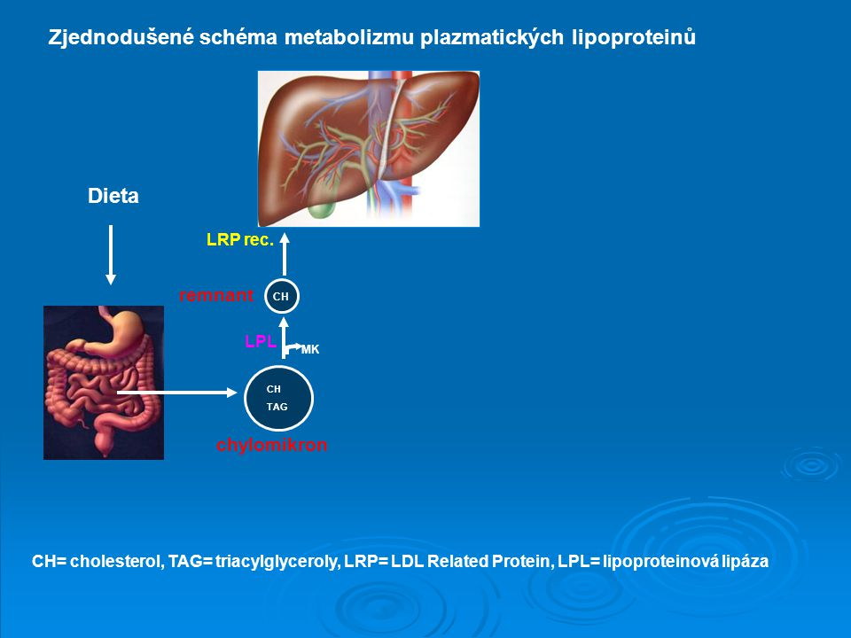 remnant chylomikron Dieta LRP rec. LPL