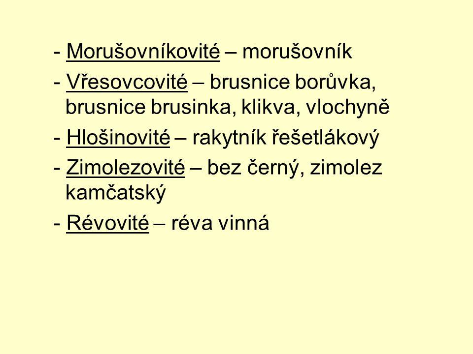 - Morušovníkovité – morušovník